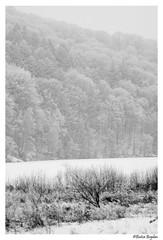 Desolate (Bogdan_b) Tags: romania codlea snow bw sony a77ii 135mm