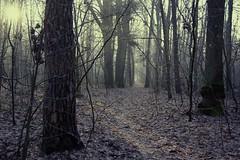 *** (pszcz9) Tags: polska poland przyroda nature natura las forest forestimages ścieżka path mgła mist fog słońce sun zima winter december grudzień pejzaż landscape beautifulearth sony a77