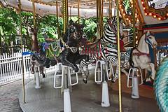 Carousel Zebra, Palm Beach Zoo (7 of 7) (gg1electrice60) Tags: palmbeachzoo carousel wildlifecarousel dreherpark 4807drehertrailn carrousel merrygoround 4807drehertrailnorth amusementpark drehertrailnorth drehertrailn florida palmbeachcounty interstate95 i95 zoo park wildlife summitboulevard summitblvd lights bulbs mirrors poles