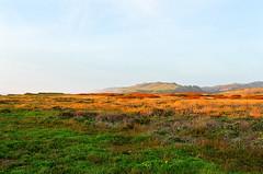 Davenport Landing (maphishus) Tags: davenportlanding hwy1 nikkor nikonnikonfm2n santacruz beach ocean sunset fujifilm reala100 landscape