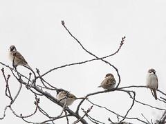 161211_GX7_1450945 (kuad9) Tags: bird