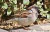 Angry birds!! (Amro Afifi) Tags: amroafifi amazing birds beautiful portrait funny photooftheday amrophotography