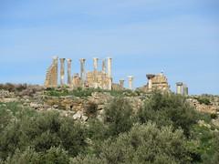 View to Capitoline Temple columns, Volubilis, Morocco (Paul McClure DC) Tags: morocco almaghrib fèsmeknèsregion volubilis jan2017 roman architecture historic scenery