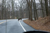 DSC00610-3 (romype77) Tags: sony a6000 ilce6000 pz 1650mm f3556 oss bear mountain state park new york bearmountain newyork wildlife nature natura panorama sevenlakes seven lakes water acqua lago lake bosco forest deer cervo cervi leaf leaves foglia foglie baita cabin albero alberi tree trees animale animali winter inverno flora fauna prato prati erba grass green verde roccia pietra stone rock rocks wood legno albergo hotel inn building edificio brook ruscello fiume hudson river