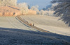Walking in a winter wonderland (balu51) Tags: neujahr winterlandschaft landschaft morgen kalt frostig reif spaziergänger hunde wiesen felder obstbäume weiss blau grün winter landscape meadows orchard tree morning wintermorning cold frosty dogs stroller walker white blue apricot newyearsday januar 2017 copyrightbybalu51