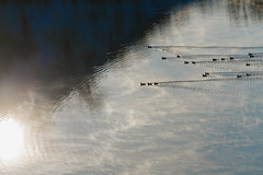 Entensee (doerrebachtaler) Tags: stromberg enten spiegelung