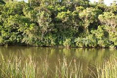 _DSC3885.jpg (JFJacobszPhotography) Tags: flow natural landscape plants nature water eastlondon kidsbeach trees side southafrica river forest green riverbank tropical subtropical