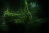Austrian Jungle (camerito) Tags: jungle forest woods wald grün tree log trunk stamm baumstamm bokeh camerito nikon1 j4 austria österreich carinthia kärnten flickr