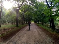 IMG_6514 (marcoderksen) Tags: mtb atb mountainbike veluwe gelderland
