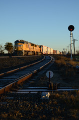 Golden Yellow (CN Southwell) Tags: up union pacific sd70m calp