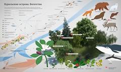 The Wealth of the Kuril Islands (infostep_infostep) Tags: russia informationdesign infographics sakhalin kurilislands kamchatkapeninsula infostep