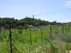 IMG_4744 (T.J. Jursky) Tags: canon europe croatia adriatic dalmatia cisla tonkojursky