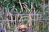 Can't fence in Nature. (Omygodtom) Tags: park wild abstract art nature grass oregon fence outdoors yahoo google nikon flickr artist dof natural explorer scene ceder oaksbottom d7000 nikon70300mmvrlens