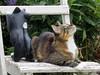IMG_0183 (d_fust) Tags: animal cat tiere kitten gato katze 猫 macska gatto katzen fust kedi ronja 貓 anak katt gatito kissa kätzchen gattino kucing 小貓 고양이 katje кот γάτα γατάκι แมว yavrusu 仔猫 का बिल्ली बच्चा