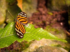 butterfly (desireeziemann) Tags: nature canon butterfly insect canon7d