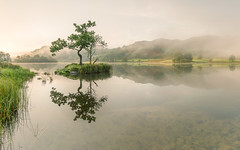 Rydal Tree (colinbell.photography) Tags: