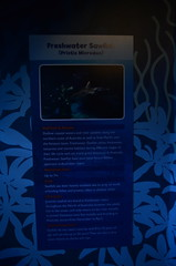 Freshwater Sawfish, Pristis microdon - Sydney Aquarium - sign (avlxyz) Tags: aquarium sydney australia sydneyaquarium fb5