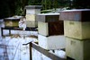 Bees gone (halifaxlight) Tags: norway radoy winter snow honeybees beehives empty vacant cubes trestles vignette blur