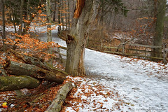 Knox Farm Bridge between Winter and Fall (DTD_5577) (masinka) Tags: bridge winter fall outdoors nature rural countryside knoxfarm statepark park ny nys wny 716 woods forest ice icy path trail hiking walking fence leaves wooden etbtsy trees eastaurora buffalo