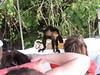 IMG_9017 (dstylebda) Tags: colonpanama gatunlake tamarins howlermonkeys sloth
