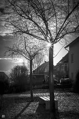 two trees (blattboldt) Tags: tree withoutleaves siedlung jena zwätzen himmelreich baum lichtundschatten lightandshadow sonyilce7m2 alpha7m2 zeiss emount general loxia250 loxia50mmf20 contrasts 陰影 樹 太陽 光線 22號光圈 blende22 sunbeam rayoflight sonyflickraward arbre ombra ombre blackwhite noiretblanc sombra prime manualfocus thuringiagermany thüringen 影 黑白 白黒 ツリー árbol albero