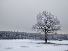 Januar (Ellenore56) Tags: 17012017 januar january winter winterlandschaft landschaft landscape scenery winterlich wintery frostig frostiy kalt cold cool baum tree feld ackerland field farmland cultivatedland wald forest wood bäume trees gutenmorgen goodmorning bedeckt overcast overcastsky wetter weather botanik botanical natur nature detail moment atmosphäre atmosphere jahreszeit season timeoftheyear augenblick sichtweise perception perspektive perspective reflektion reflection reflexion farbe color colour licht light inspiration imagination faszination magic magical panasonicdmctz61 ellenore56 8°c winterscene morning ammorgen am inthemorning 0815h outlook vista snow
