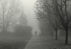In The Mist ... (MargoLuc) Tags: fog fading misty winter scenery new year path trees alone man walking whispering bw landscape cold days
