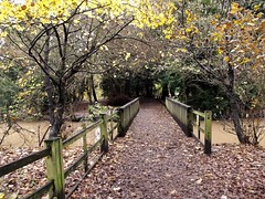 Rufford country park (kelvin mann) Tags: ruffordcountrypark rufford nottinghamshire notts outdoors