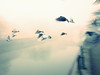 Flying High (Jérôme Olivier) Tags: oiseaux brume brouillard eau canal ricoh artlibres