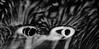 F_47A4846-BW-1-Canon 5DIII-Canon 70-300mm-May Lee 廖藹淳 (May-margy) Tags: maymargy bw 黑白 臉譜 facesinplaces 浪痕 海灘 石頭 天馬行空鏡頭的異想世界 mylensandmyimagination 線條造型與光影 linesformandlightandshadows 心象意象與影像 naturalcoincidencethrumylens 台東縣 台灣 中華民國 taiwan repofchina f47a4846bw1 pebbles beach water tracks taitungcounty canon5diii canon70300mm maylee廖藹淳 mood 心情 moody 小怒