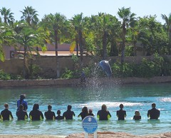 Bahamas (Paradise Island) Dolphin Cay offers playing with playful bottlenose dolphines