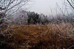 _DSC3342 (sebastianwerba) Tags: raureif oberthambach egglham beutelsbach 2016 natur freizeit erholung winter