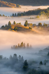 Dreamlike (michael ryan photography) Tags: sonoma sonomacounty california fog mist valley trees warm brown light cool fall dreamlike dream michaelryanphotography