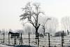 rural winter scene (j.p.yef) Tags: peterfey jpyef westfalen seasons winter countryside animals horses meadow grass fog yef velmede
