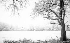 P1180008-3.jpg (loenatik) Tags: assel gelderland kootwijk nature nederland radiokootwijk sneeuw snow tree winter sky