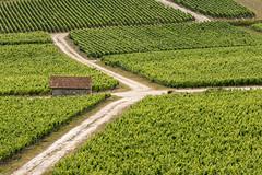 A la recherche de loges de vignerons (Patrick Mayon) Tags: summer france green landscape vineyard europe outdoor champagne vert t paysage fr vignoble vigne cabane loge champagneardenne ambonnay champenois