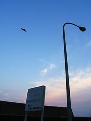 (  / Yorozuna) Tags: sunset sky cloud birds silhouette japan port coast seaside twilight streetlight streetlamp bank  niigata gradation       embankment breakwater                     igarashihama