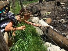 IMG_8321 (Club Pyrene) Tags: cerdanya pirineos pirineus campaments pyrene campamentos coloniesestiu coloniesestiupyrene colòniesestiu