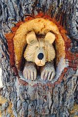 Tree Bears (1) (Ian E. Abbott) Tags: bear wood sculpture folkart bears chainsaw carving bayarea santaclara southbay treestump woodcarving chainsawsculpture chainsawart 10faves