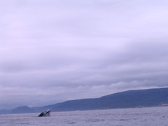 Whale Magic, Tadoussac, Quebec, Canada
