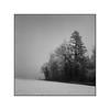 Winter days (cardijo) Tags: analog austria österreich salzburg landscape landschaft tree baum bw blackandwhite tessar rodinal rolleiflex film fd ilford fog nebel monochrome nikon coolscan