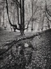 The myth of the fog B&N (Ivan Ant) Tags: forest fog foggy tree trees mystic autum winter blackwhite otzarreta
