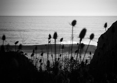 Davenport Landing (maphishus) Tags: davenportlanding hwy1 nikkor nikonnikonfm2n santacruz beach ocean sunset fujifilm reala100