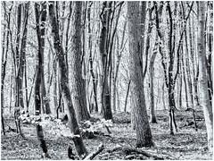 No Way... (Ody on the mount) Tags: anlässe bäume em5 hdr licht mzuiko6028 omd pflanzen schwäbischealb wald wanderung bw monochrome sw