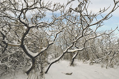 (Evangelina M) Tags: winter trees branches