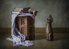 Gatos y libros (JACRIS08) Tags: