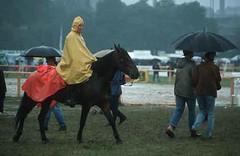 L1165 (lotharlenz) Tags: caballo cavalo cheval equus fotolotharlenz häst hest hestur hobu horse konj paard pferd zirgs reiten regen regenschirm schlechteswetter