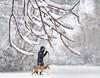 walkies (marianna_a.) Tags: p3110264 snow falling winter canada lady walking yellow dog montreal mariannaarmata