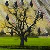 Pigeons Dream Too (Lemon~art) Tags: kreativepeople treatthis pigeon town country tree manipulation