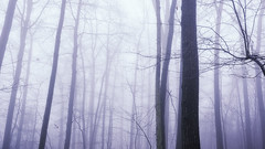 Foggy Day (3dRabbit) Tags: fog foggy day tree mist noon nj usa nature trees forest winter drop light sungjinahn canon wideangle